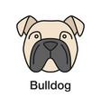 english bulldog color icon vector image