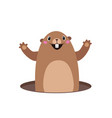 groundhog popping out of his hole flat vector image
