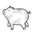 piggy bank sketch engraving vector image vector image