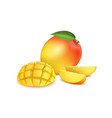 realistic detailed 3d whole mango and sliced vector image
