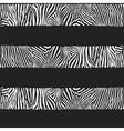 stripes zebras vector image vector image