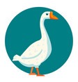 white goose vector image