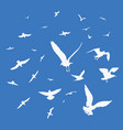 seagulls on blue background vector image