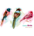 colorful tropic birds watercolor beautiful vector image vector image