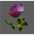 Flower element on black background vector image vector image