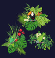 green parrot and toucan on tree branch vector image