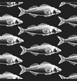 hand drawn fish seamless pattern seabass on chalk vector image