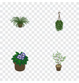 isometric flower set of flowerpot plant blossom vector image