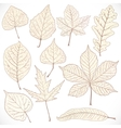 Skeleton autumn leaves of different trees isolated vector image