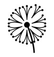 dandelion plant icon simple style vector image vector image
