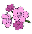 sakura icon cartoon vector image