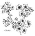 sakura flower and leaf hand drawn botanical vector image vector image