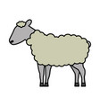 sheep cartoon animal wild life vector image