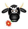 Funny cow with a flower in teeth vector image vector image