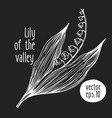 hand drawn flower lily valley sketch on vector image