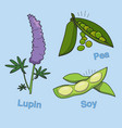 soy lupin and pea vector image