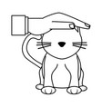 hand pet cat protection health care animal