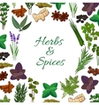 Spices and spicy herbs seasonings poster vector image vector image