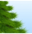 Background Christmas tree spruce vector image vector image