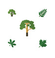 flat icon nature set of maple acacia leaf wood vector image vector image