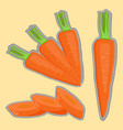 ripe vegetable yellow carrot vector image vector image