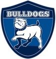 English bulldog british rugby sports team mascot vector image