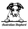australian shepherd peeking dog - head isolated