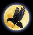 Black raven vector image vector image
