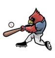 cardinal baseball vector image vector image