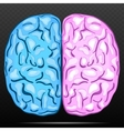 Left and right hemisphere of human brain vector image