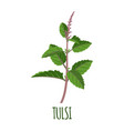 tulsi icon in flat style on white background vector image vector image