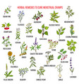 best herbs for menstrual cramps treatment vector image vector image
