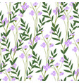 blooming matthiola flower with leaves and petals vector image