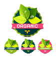 organic labels with leaves isolated on white vector image vector image