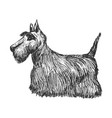 scottish terrier side view vector image vector image