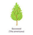 basswood icon flat style vector image