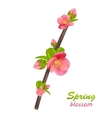 Branch of Japanese Quince Chaenomeles japonica vector image vector image