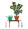 Flowerpot in pot watering can vector image vector image