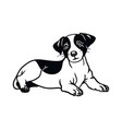 jack russell terrier dog - isolated vector image vector image