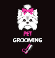 pet grooming and washing vector image vector image