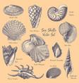 sea shells engravings collection vector image