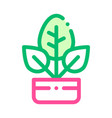 bush plant leaves in pot thin line icon vector image vector image