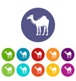 camel icons set color vector image vector image