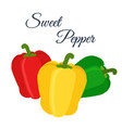 cartoon flat bell peppers - red green yellow vector image vector image