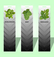 long label with herbs vector image