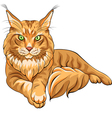 Maine Coon American Longhair cat vector image vector image