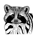 Racoon or coon head animal vector image vector image