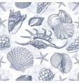 sea shell pattern texture vector image