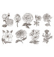 set wedding botanical flowers in garden or vector image