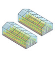 two greenhouses with growing plants inside vector image